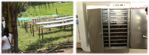 The traditional drying facility (left) and the newly launched Multi-Porpuse
